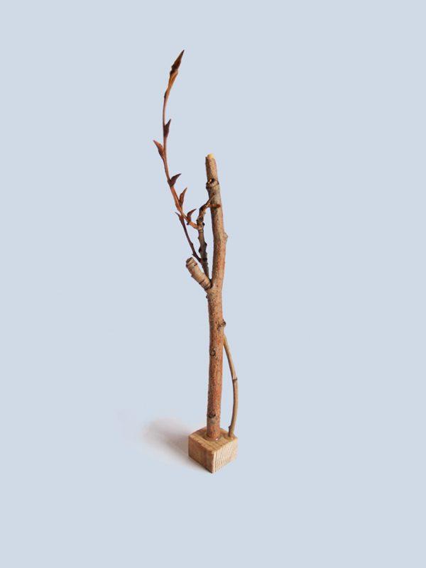 ilustracion-en-madera